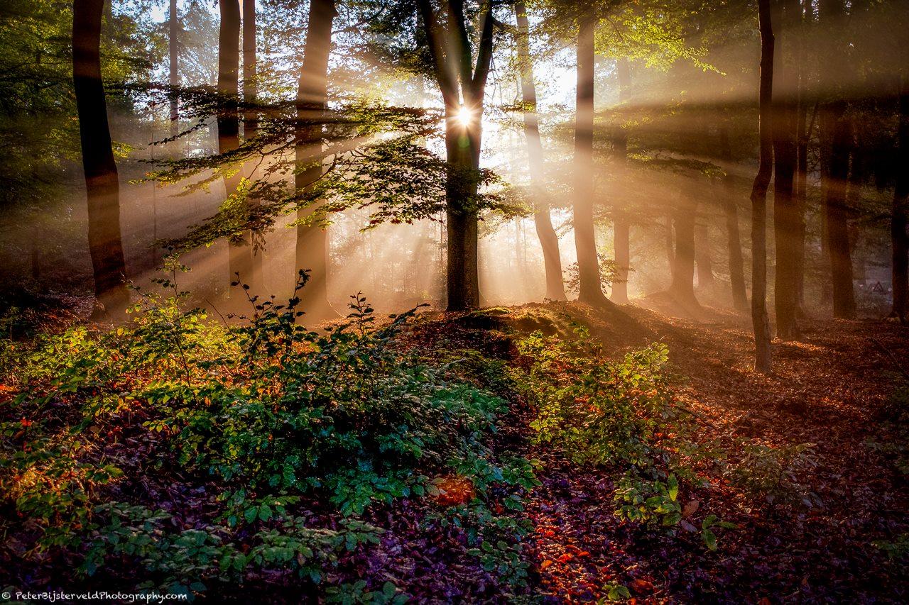 Mooiste foto van Nederland